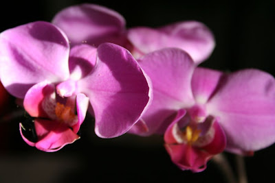Focus on life: The beauty of flowers: The deep purple orchid :: All Pretty Things