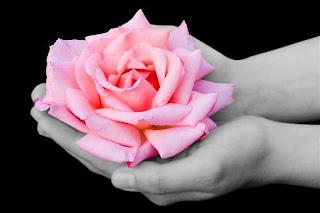 fondo en blanco y negro Rosas en las manos