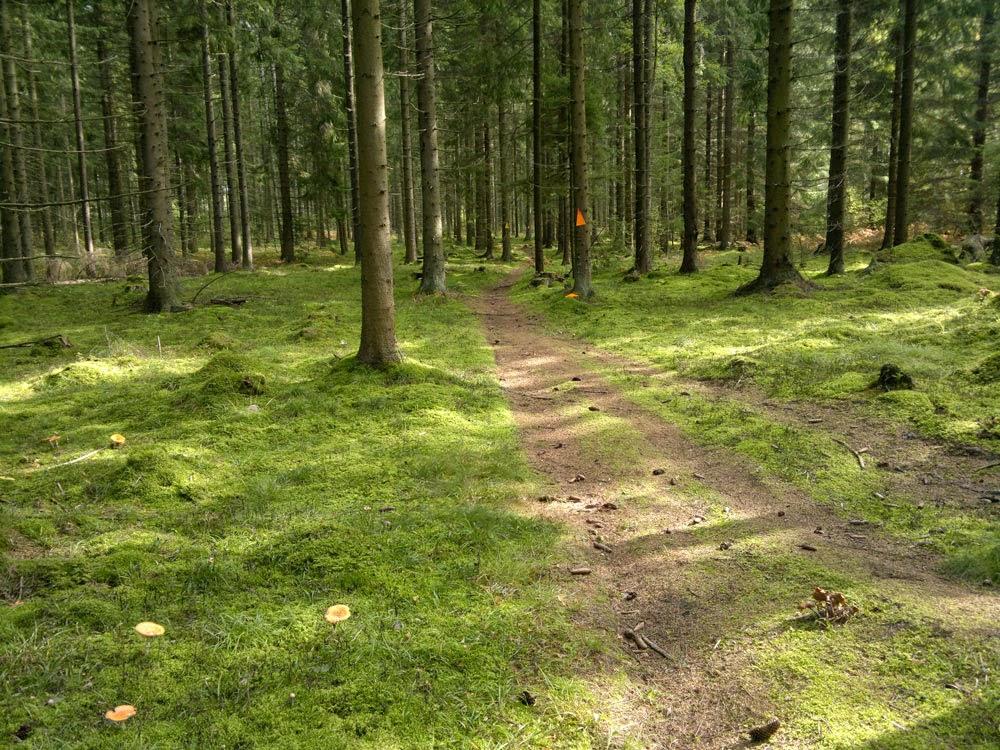 Att promenera i en skog som inte är full av småträd och kvistar är avkopplande! Bra för själen tror jag. Bra för att ladda batterierna!