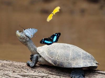 rùa cute
