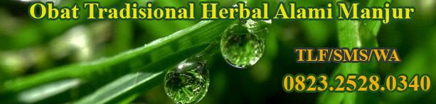 Obat Herbal Manjur Ampuh Alami