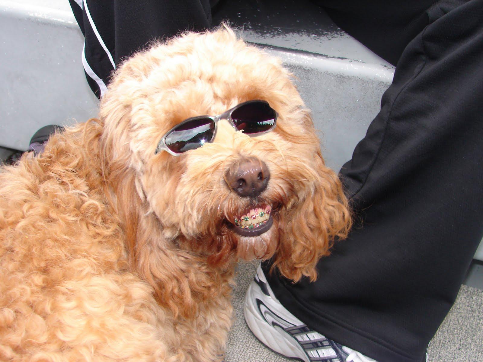 http://1.bp.blogspot.com/-TJTQ3_xYUYU/TbGRhoDqmwI/AAAAAAAAANQ/1q6TE4fUnRM/s1600/dog_braces.jpg