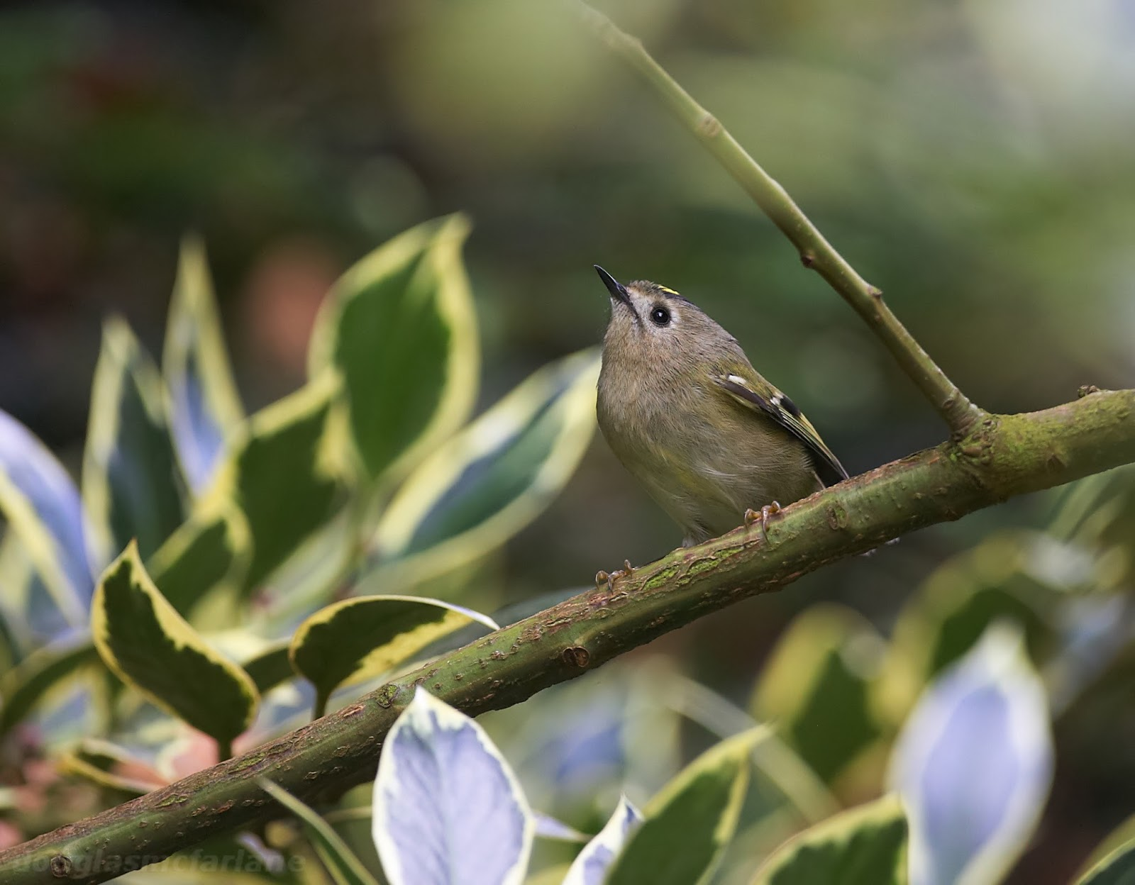 Bird Photography In Northamptonshire And The Uk Here