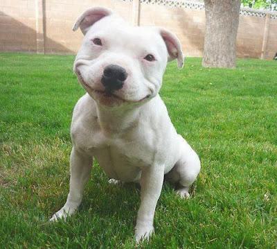 http://1.bp.blogspot.com/-TKDnDcBJYUo/UtyvjPIHp7I/AAAAAAAAC9k/oruwyMRUxV0/s1600/Smiling+Dog.jpg