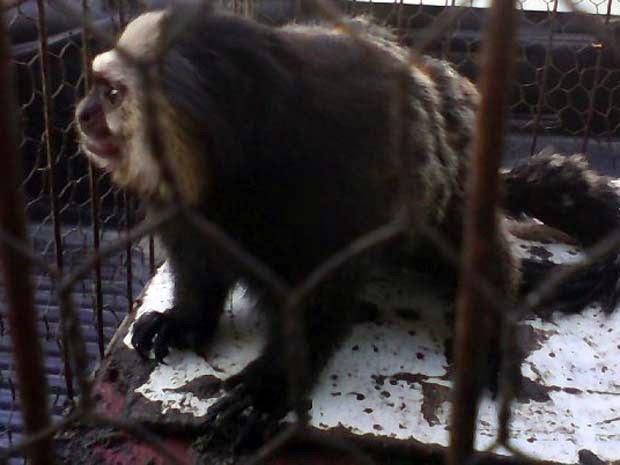 Animais foram encaminhados para Centro de Triagem (Foto: Secretaria de Meio Ambiente de Porto Seguro / Divulgação)