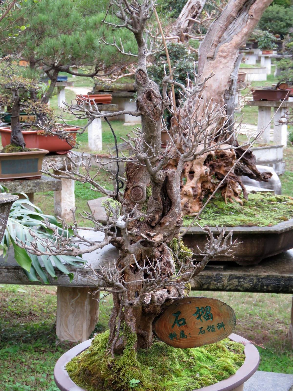 SUKHA A Gorgeous Bonsai Garden Huangguoshu Guizhou