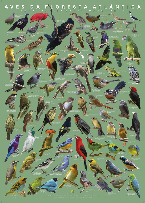Floresta Atlântica Volume II
