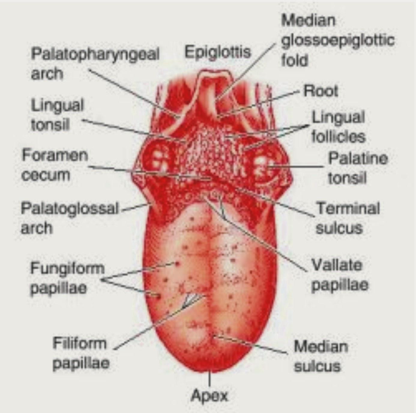 Through Tongue Peek Diseases Allergies To Syphilis Media Online