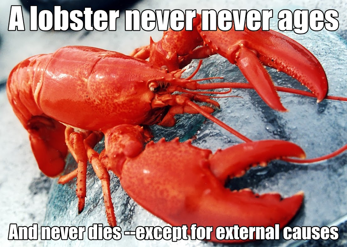 NeuroDojo: All lobsters are mortal