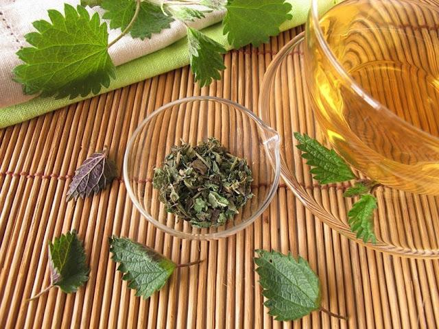蕁麻茶(Nettle Tea)