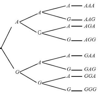 Diagram pohon pelemparan 3 keping uang logam.