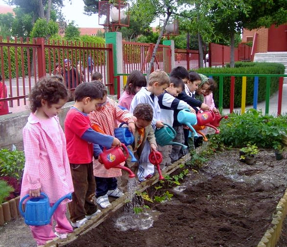Ampa colegio zaragoza un huerto en nuestro colegio for Asociacion de plantas en el huerto