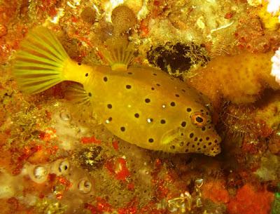A colorful sea fish