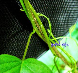 www.bestastrologer4u.blogspot.in