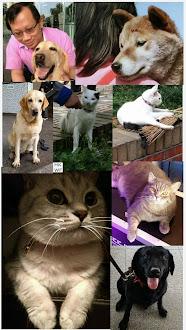 HK Snob loves pets