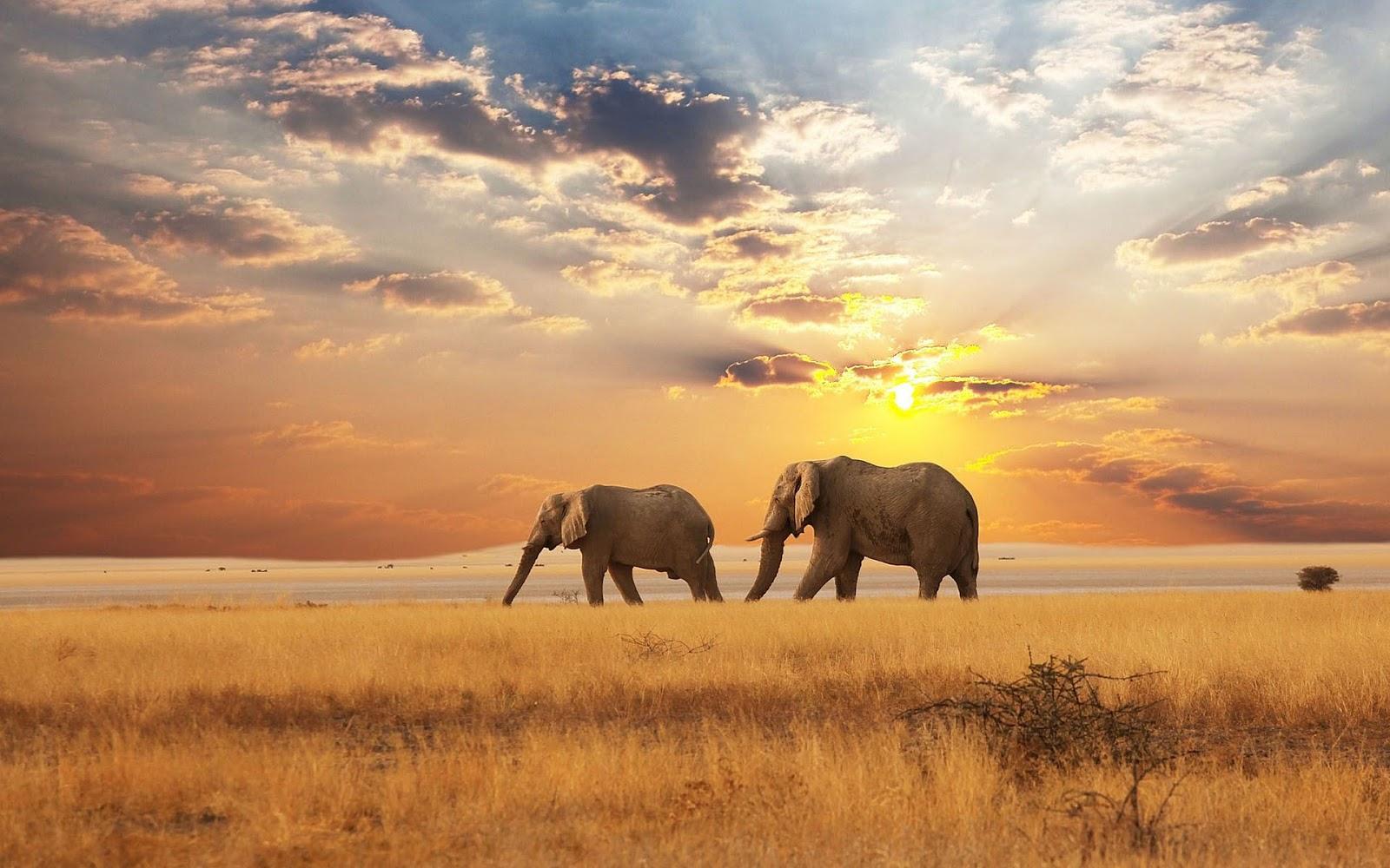 olifanten achtergronden bureaublad - photo #6