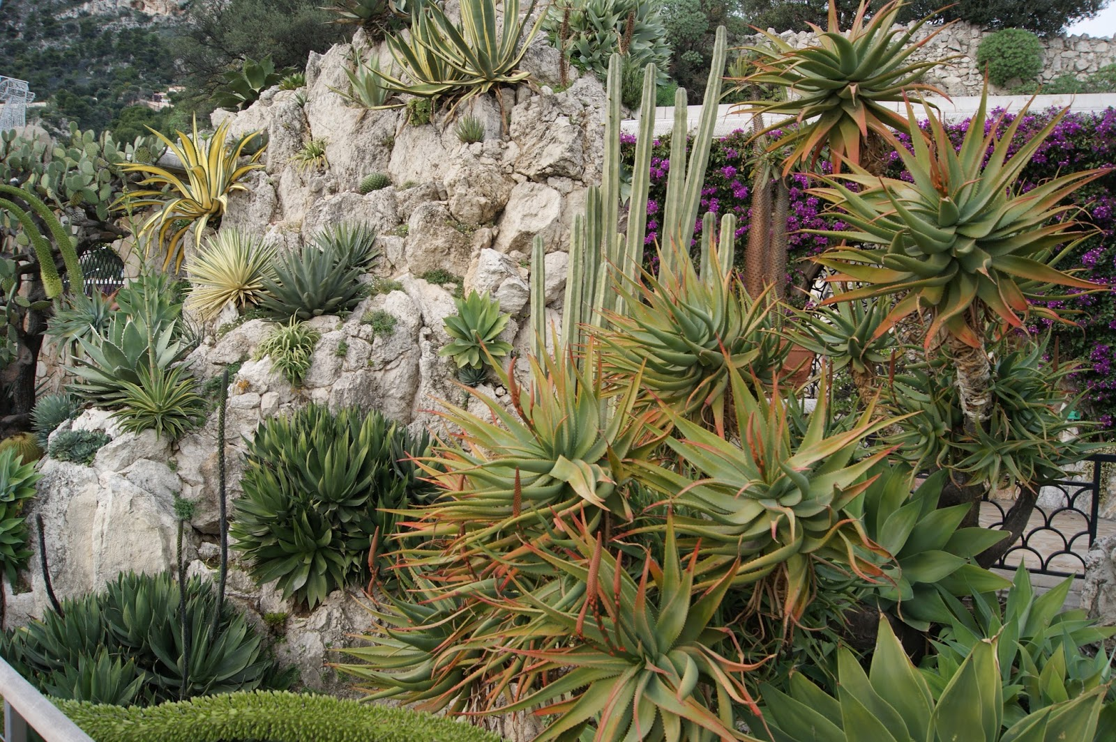Succulent sundae monaco jardin exotique part 1 for Jardin exotique