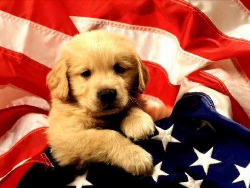 Puppy with Flag