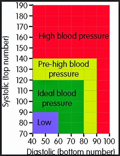 BP Chart (Blood Pressure Chart)