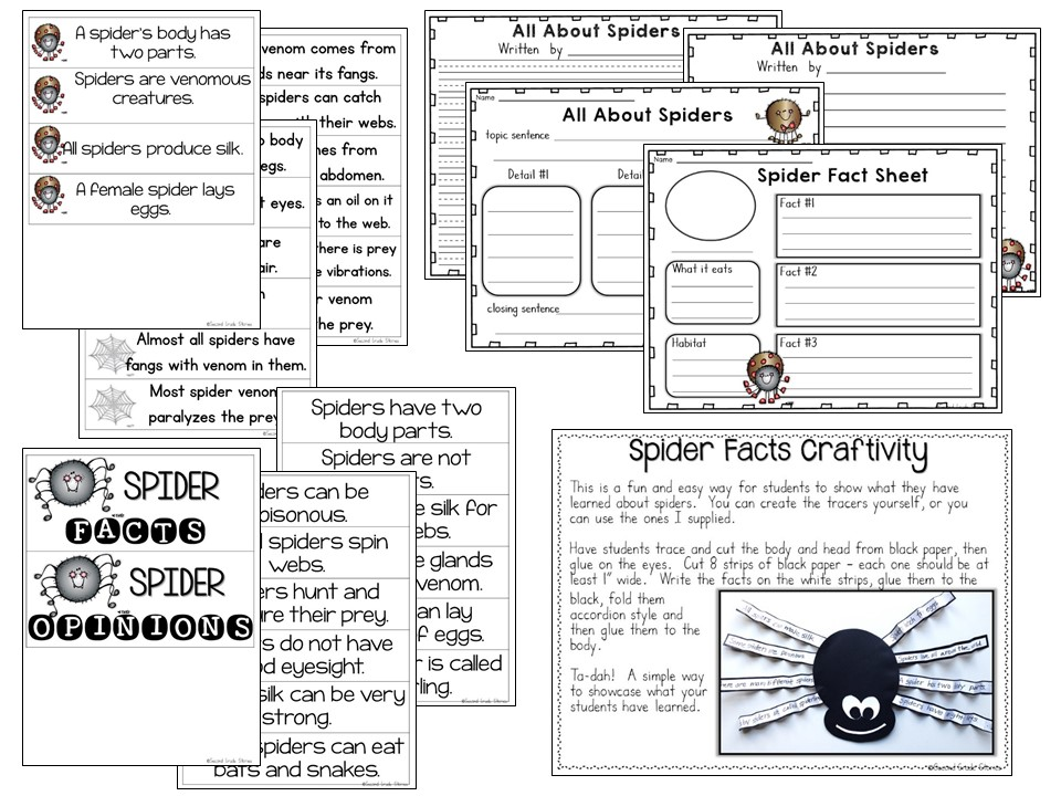 writing spider facts Animal articles (reading  learn how you can identify a brown bear in the wild and other interesting facts in this reading  worksheet includes a writing prompt,.