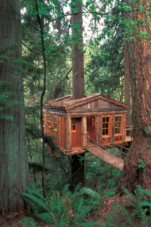 Treehouse Men Flyer Interesting Creative Designs