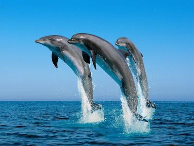 Дельфины - посланники инопланетного разума
