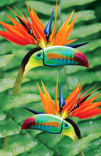 Birds of Paradise Animal Plant Hybrid Photo Photoshop Colorful Bird Jungle Rainforest