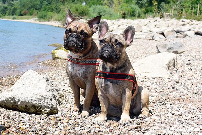 Mit Hund am Rheinstrand