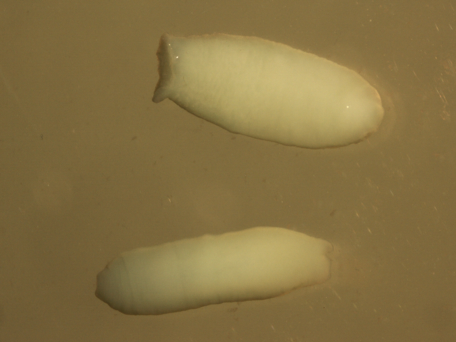Creepy Dreadful Wonderful Parasites February 2012