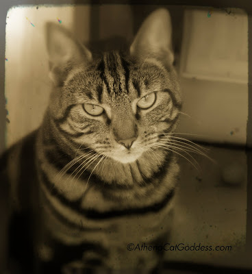 Cat Fine Art Photograph