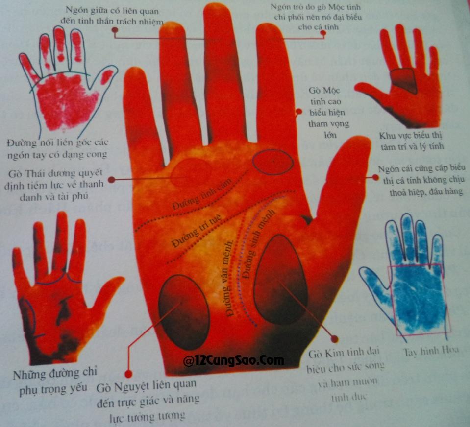 Các đường chỉ tay trên bàn tay rất quan trọng