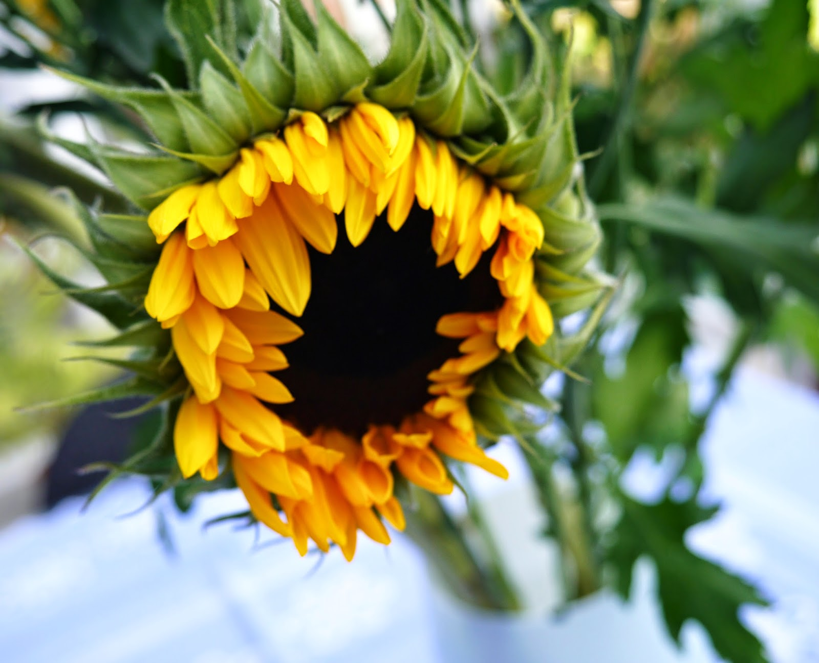 sunflower muslim Search through thousands of names that mean 'flower' - meaning of names is the place to come for the best resources for names that mean 'flower'  muslim name .