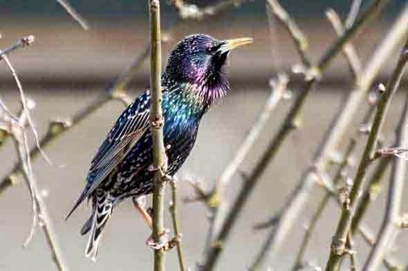 bird_in_spring
