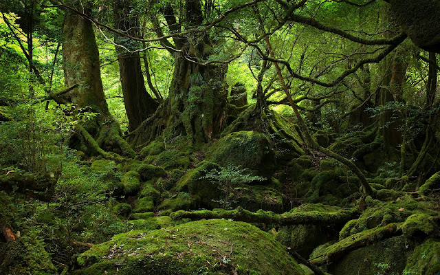 Untouchable green forest wallpaper