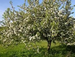 Piante e fiori alberi e piante da frutto come sceglierle - Alberi frutto giardino ...