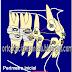 …hay que cinchar los arcos en ortodoncia???