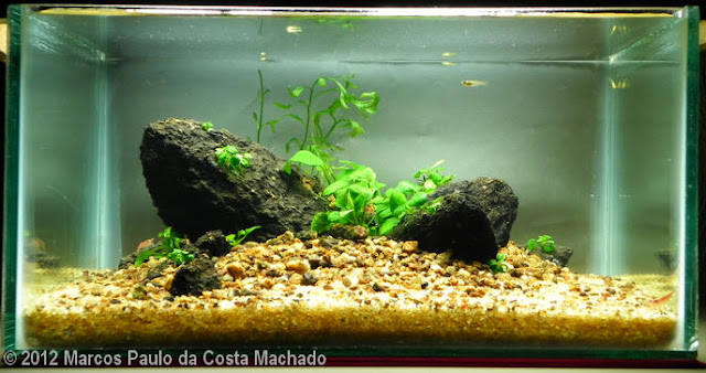 AGA 2012 - Marcos Paulo Machado 10L Aquatic Garden: Lot of Rocks