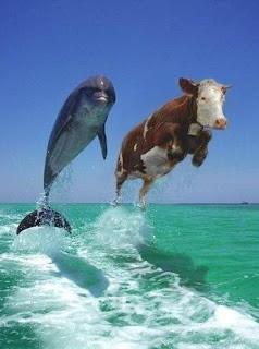dolphinstresstest.jpg (383×514)