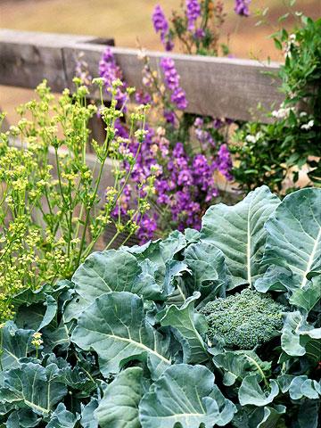Money saving gardening tips a dandelion diary - Money saving tips in gardening ...