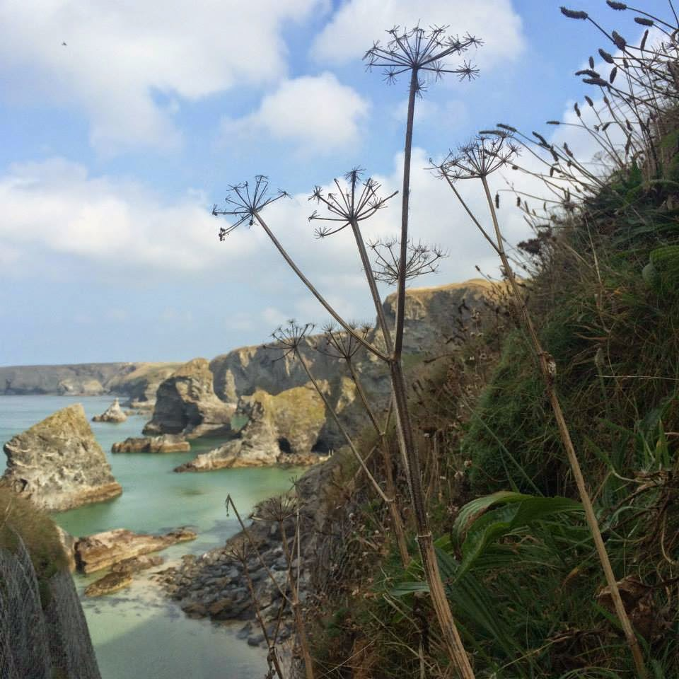 Cow Parsley 1953 Part Of The Post: Cornish Campervan Adventure Part 2