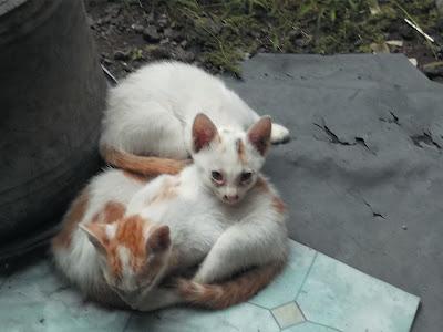 Foto kucing pemalas