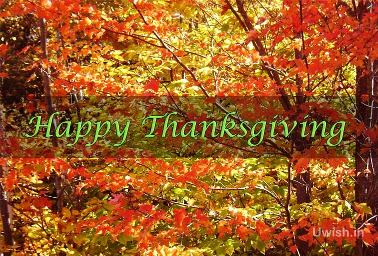 Happy Thanksgiving e greeting cards and wishes with nature.