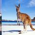 Những hãng cần tham khảo để săn vé máy bay giá rẻ đi Úc