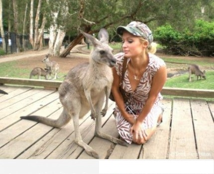 Kangaroos Photobomb Paris Hilton