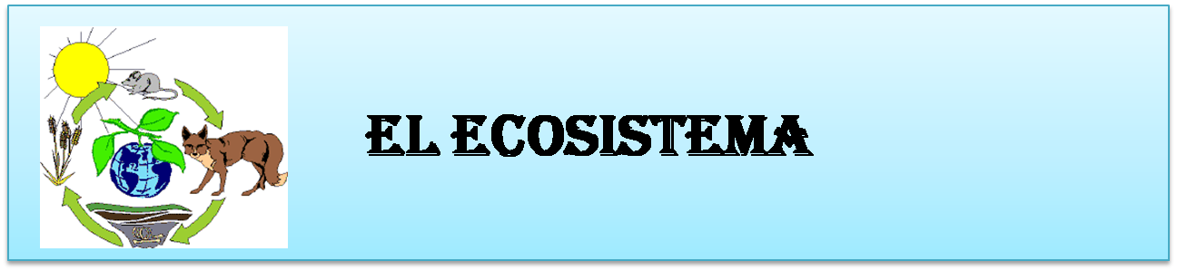 El Ecocistema