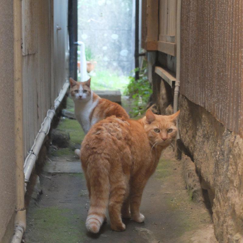 江ノ島の猫の写真