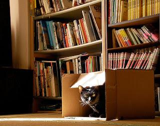chat caché dans un carton de déménagement