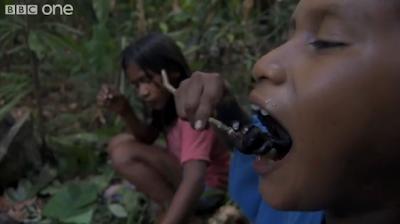 Labah-Labah Berbisa Dipanggang Untuk Makan Malam (Video)