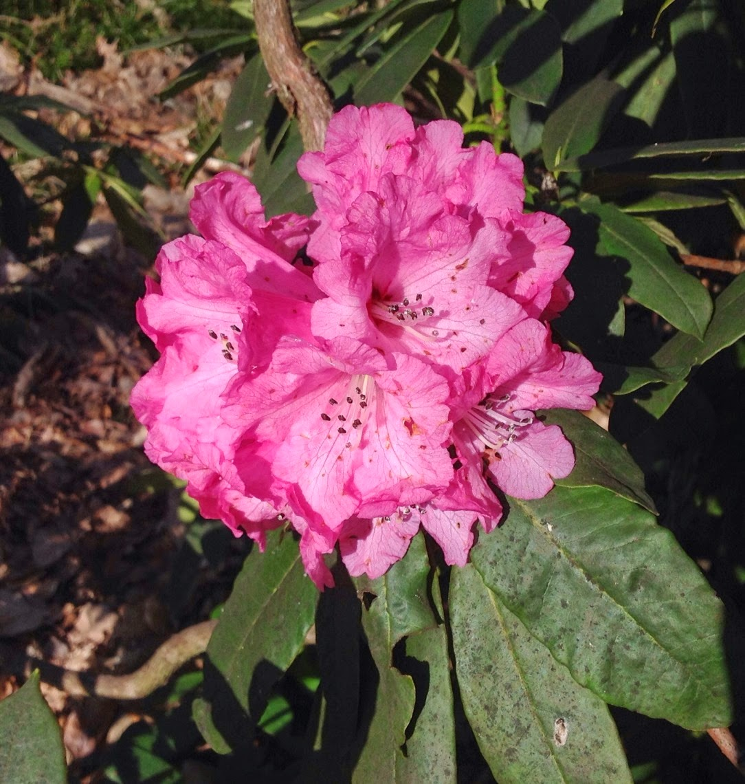 rhododendron senior personals Around new england: rhododendrons flourish  a texas teen's dream came true when she took her senior photos at gillette  dating in a rural area is.