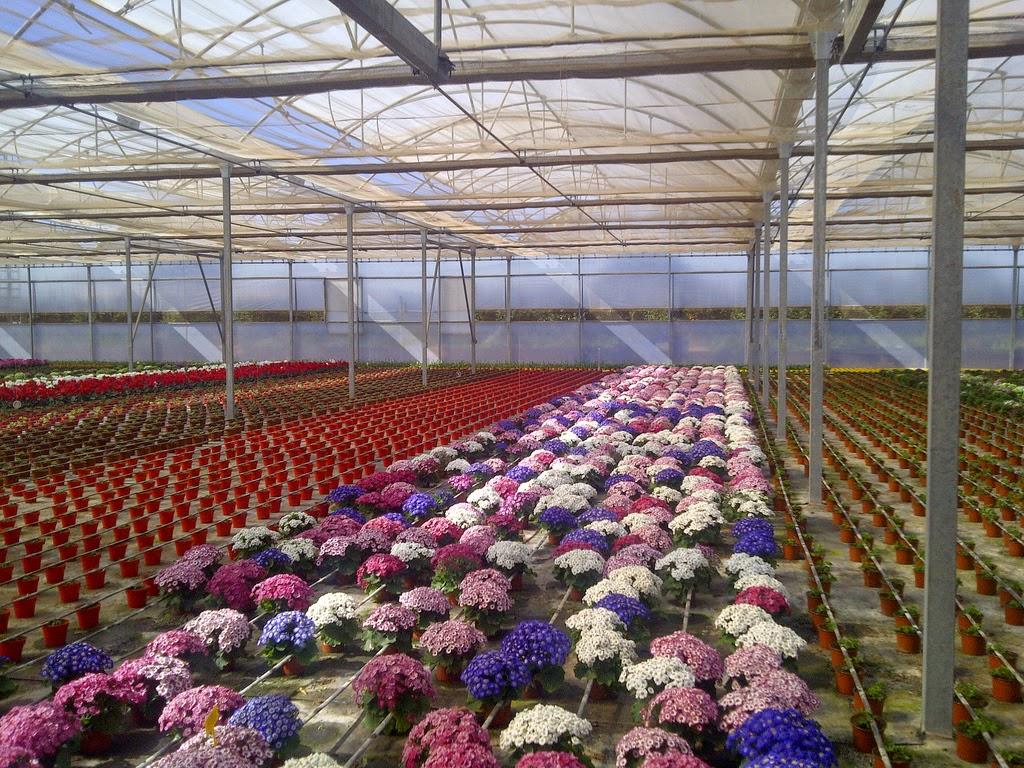 Bajada del iva de flores y plantas ornamentales - Empresa jardineria malaga ...